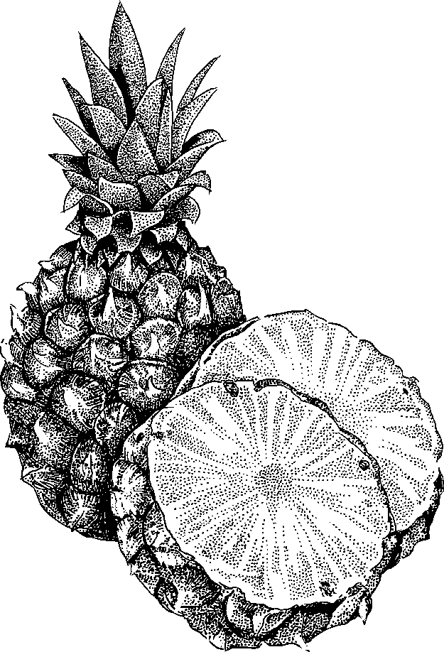 coloring pineapple clipart black and white clipart panda free clipart images pineapple white and clipart coloring black