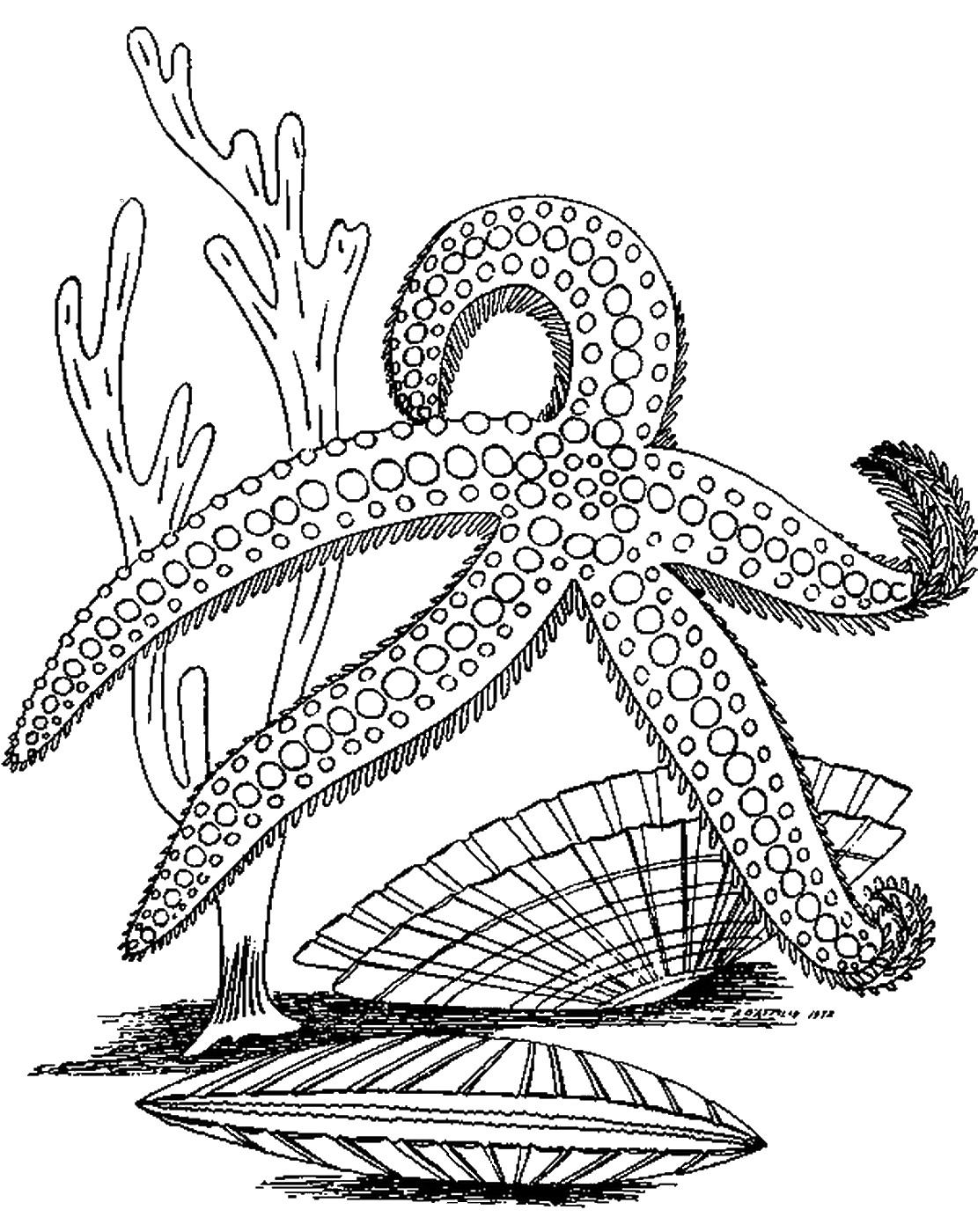coloring sheet starfish coloring page starfish coloring pages to download and print for free page sheet coloring starfish coloring
