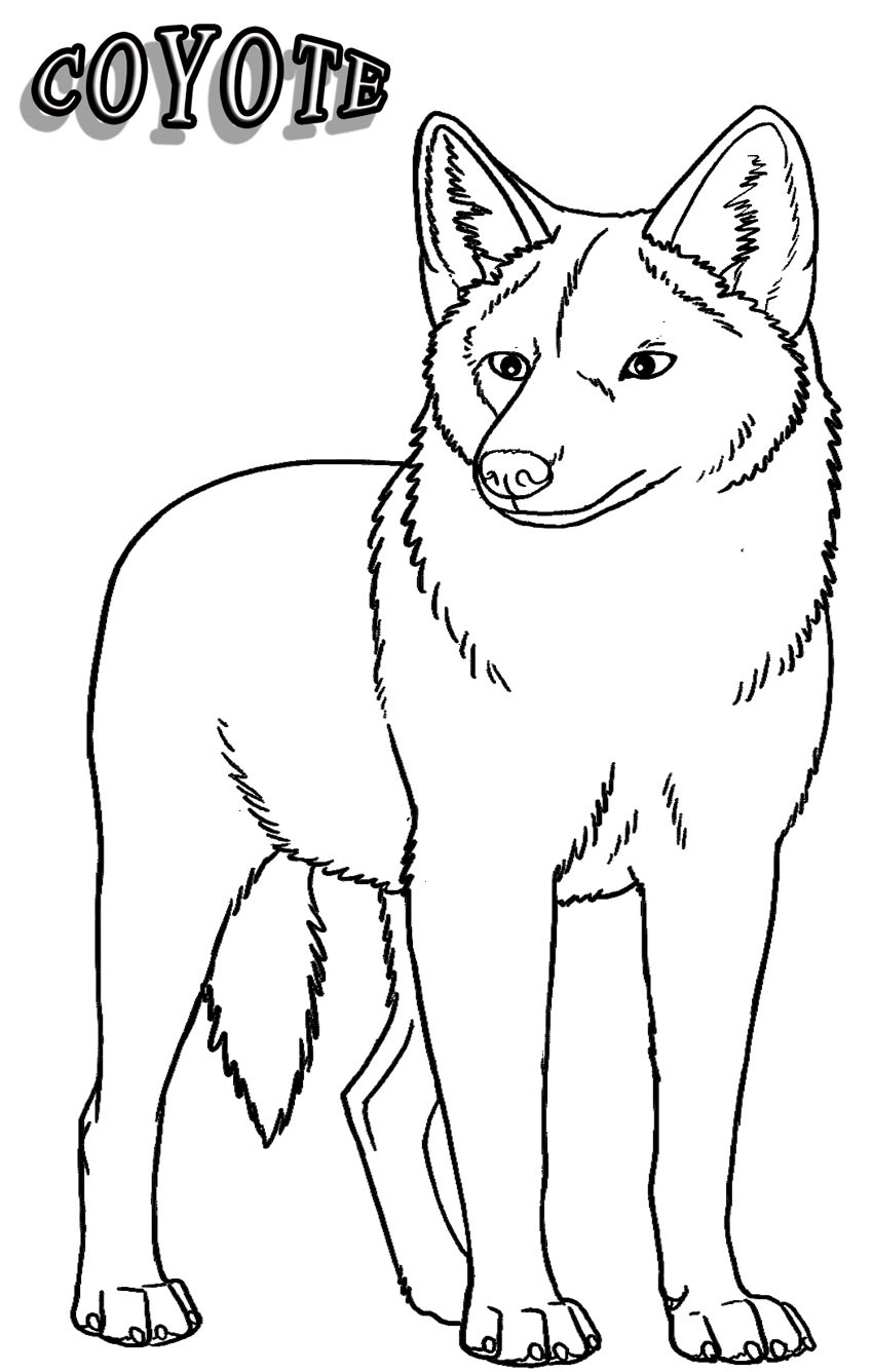 coyote coloring free printable coyote coloring pages for kids coloring coyote