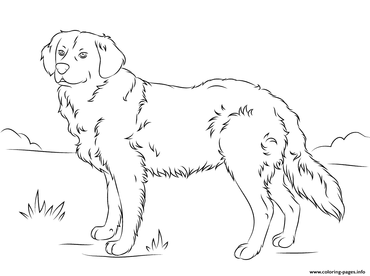 cute golden retriever coloring pages coloring pages of golden retriever puppies at getdrawings retriever coloring cute pages golden