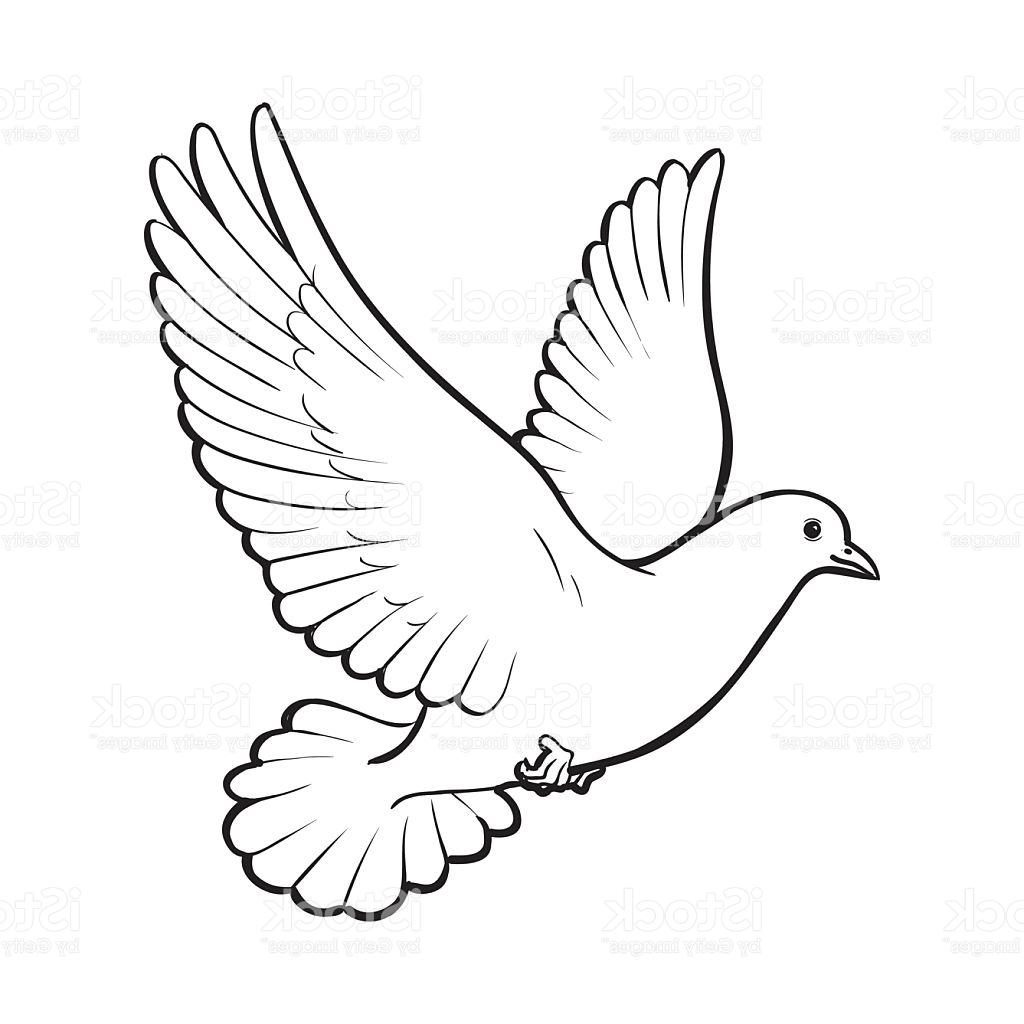 dove drawing free flying white dove isolated sketch style illustration dove drawing