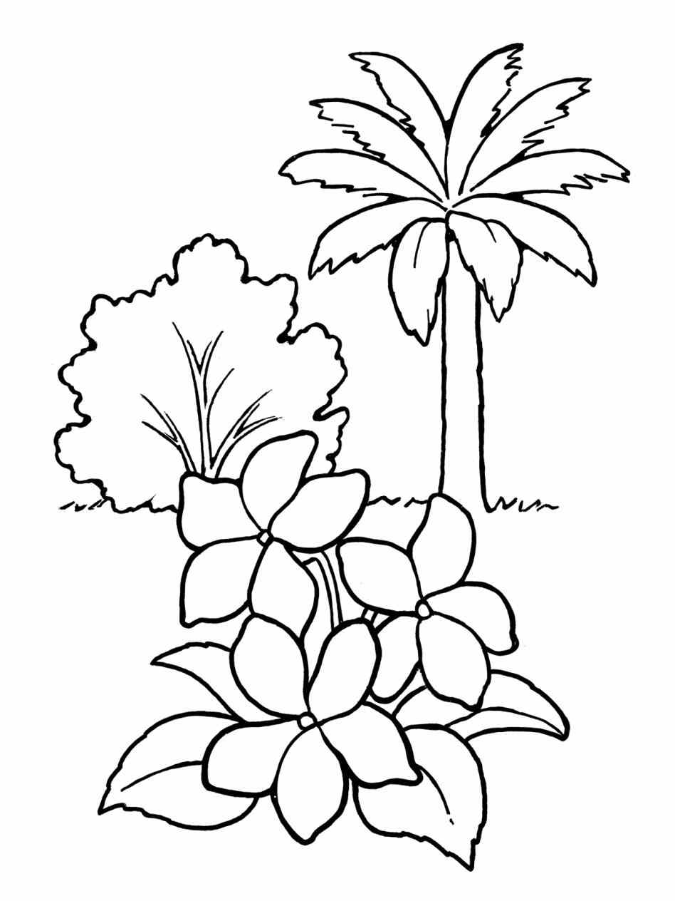 draw plants cotton plant drawing at getdrawings free download plants draw