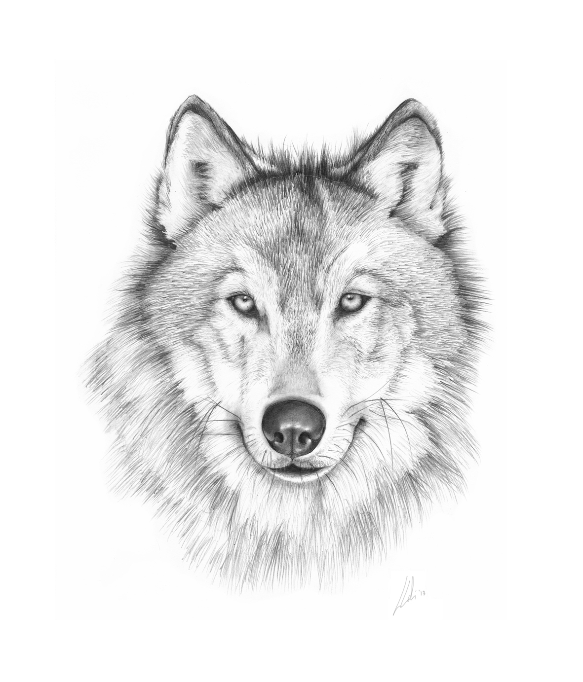 draw wolf wolf pencil drawing on behance wolf draw