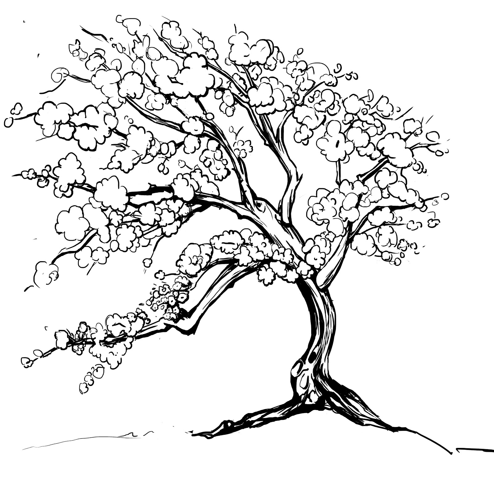 drawing of cherry blossom tree cherry blossoms tree drawing at getdrawings free download blossom of drawing tree cherry