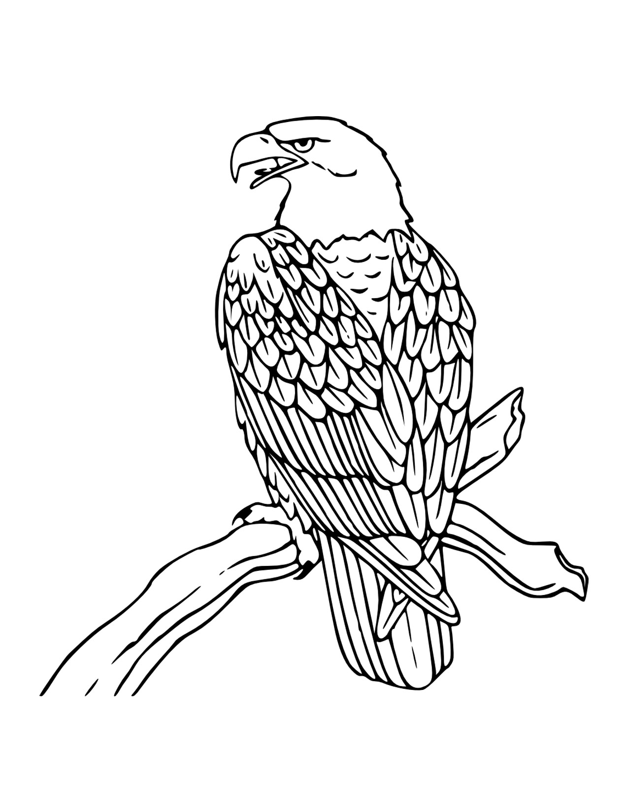 eagle color pages eagle coloring pages to download and print for free color eagle pages