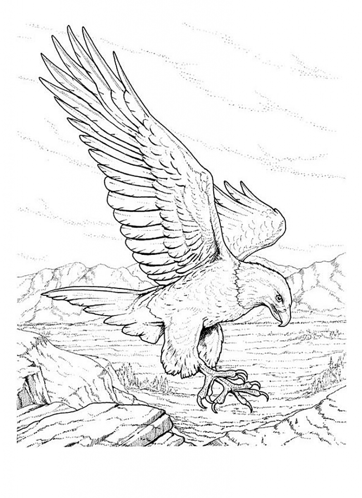 eagle coloring pages printable the eagle stories for muslim kids coloring eagle pages printable