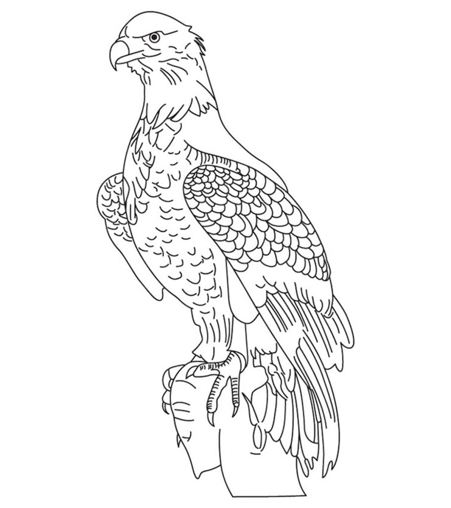 eagle coloring sheet 20 cute eagle coloring pages for your little ones coloring eagle sheet