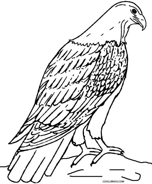 eagle coloring sheet printable eagle coloring pages for kids cool2bkids sheet coloring eagle