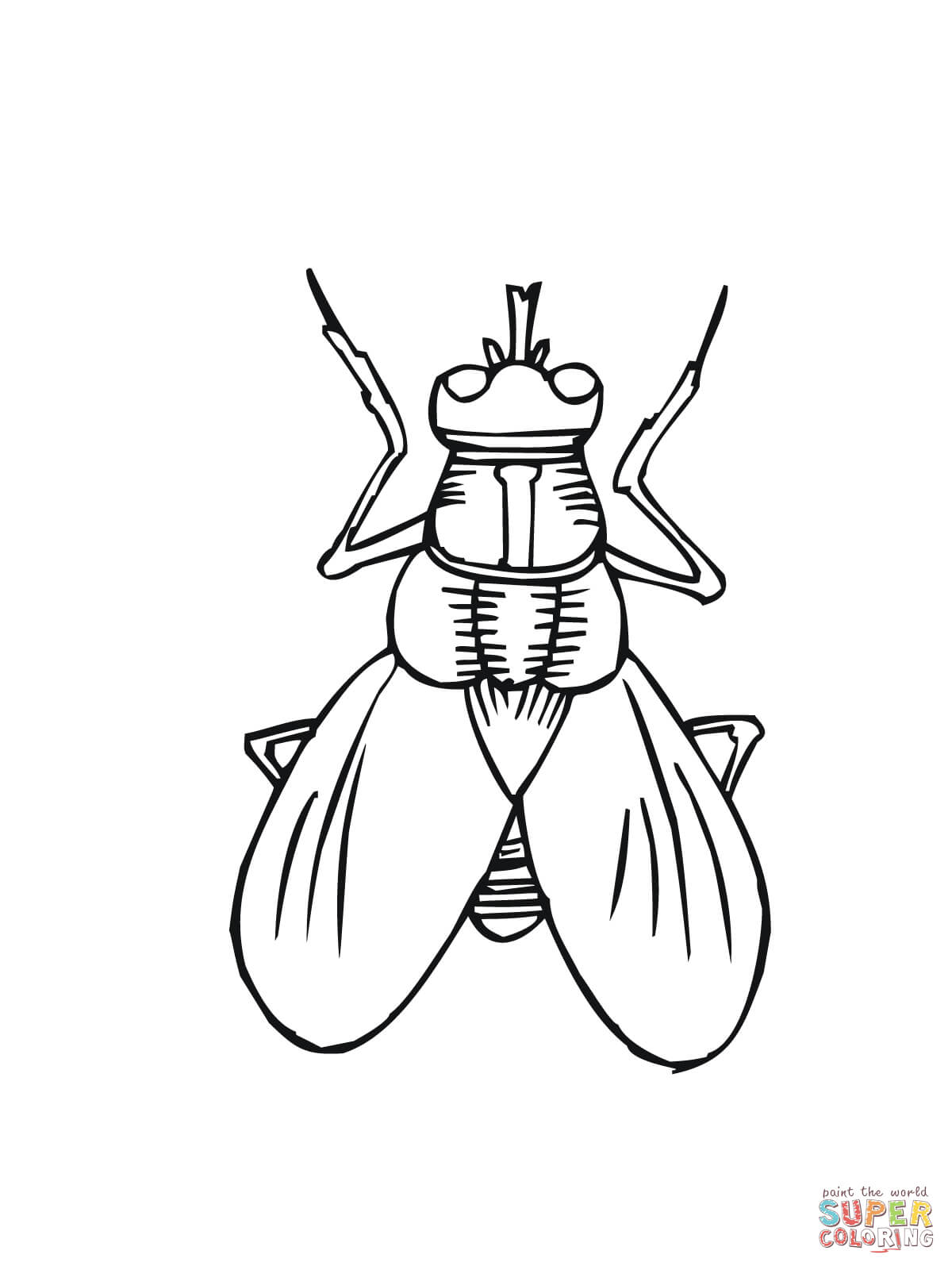 fly coloring page fly coloring pages coloring pages to download and print fly page coloring