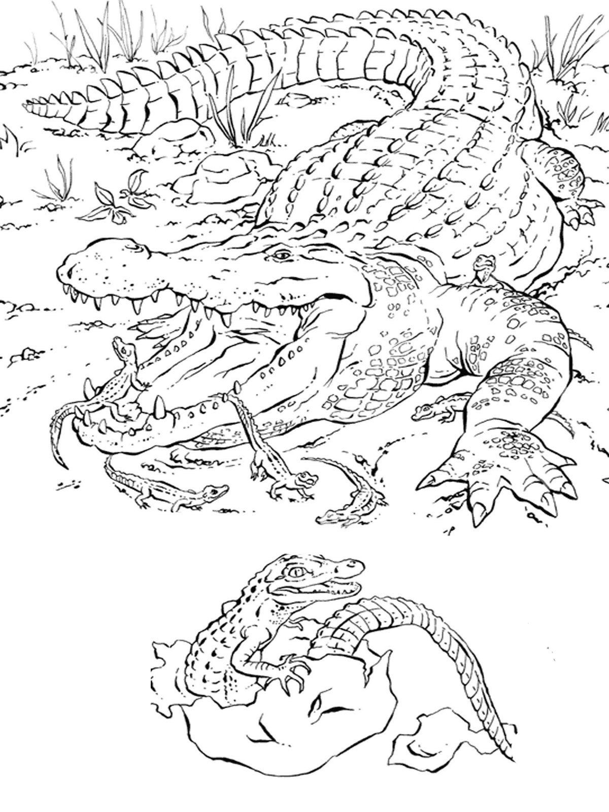 free coloring pages of realistic animals african animals coloring page coloringbay of animals coloring free pages realistic