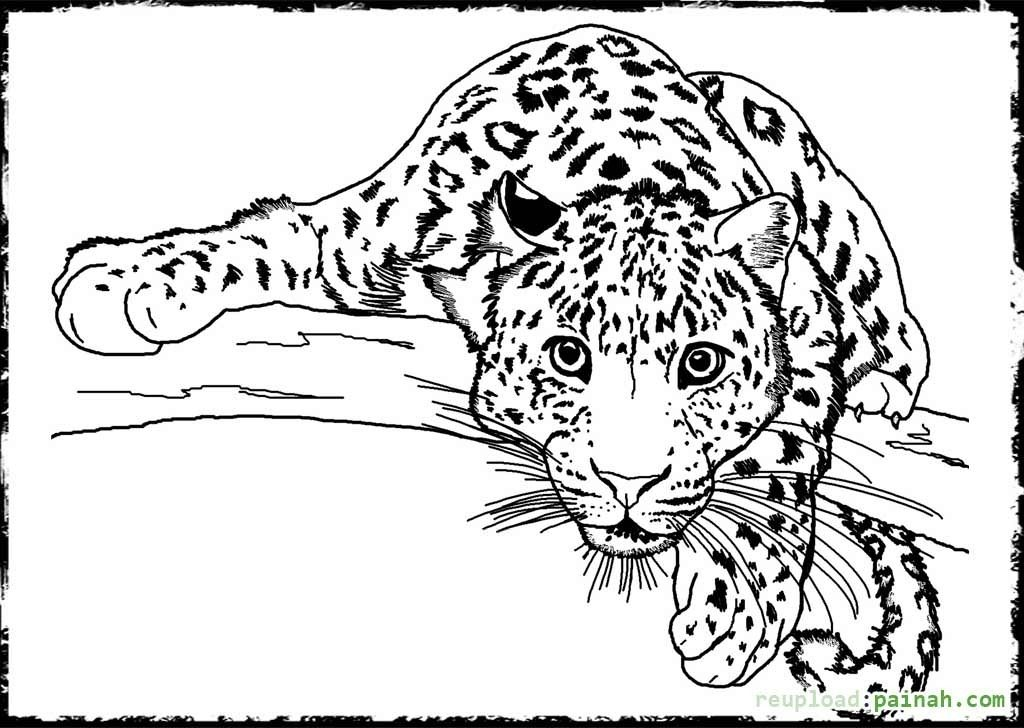 free coloring pages of realistic animals all animals coloring pages download and print for free free pages coloring of animals realistic