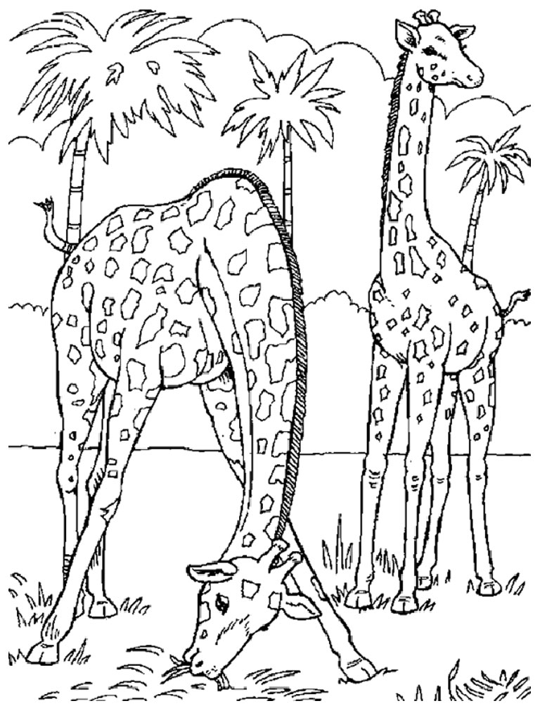 free coloring pages of realistic animals animal coloring pages best coloring pages for kids animals realistic of coloring pages free