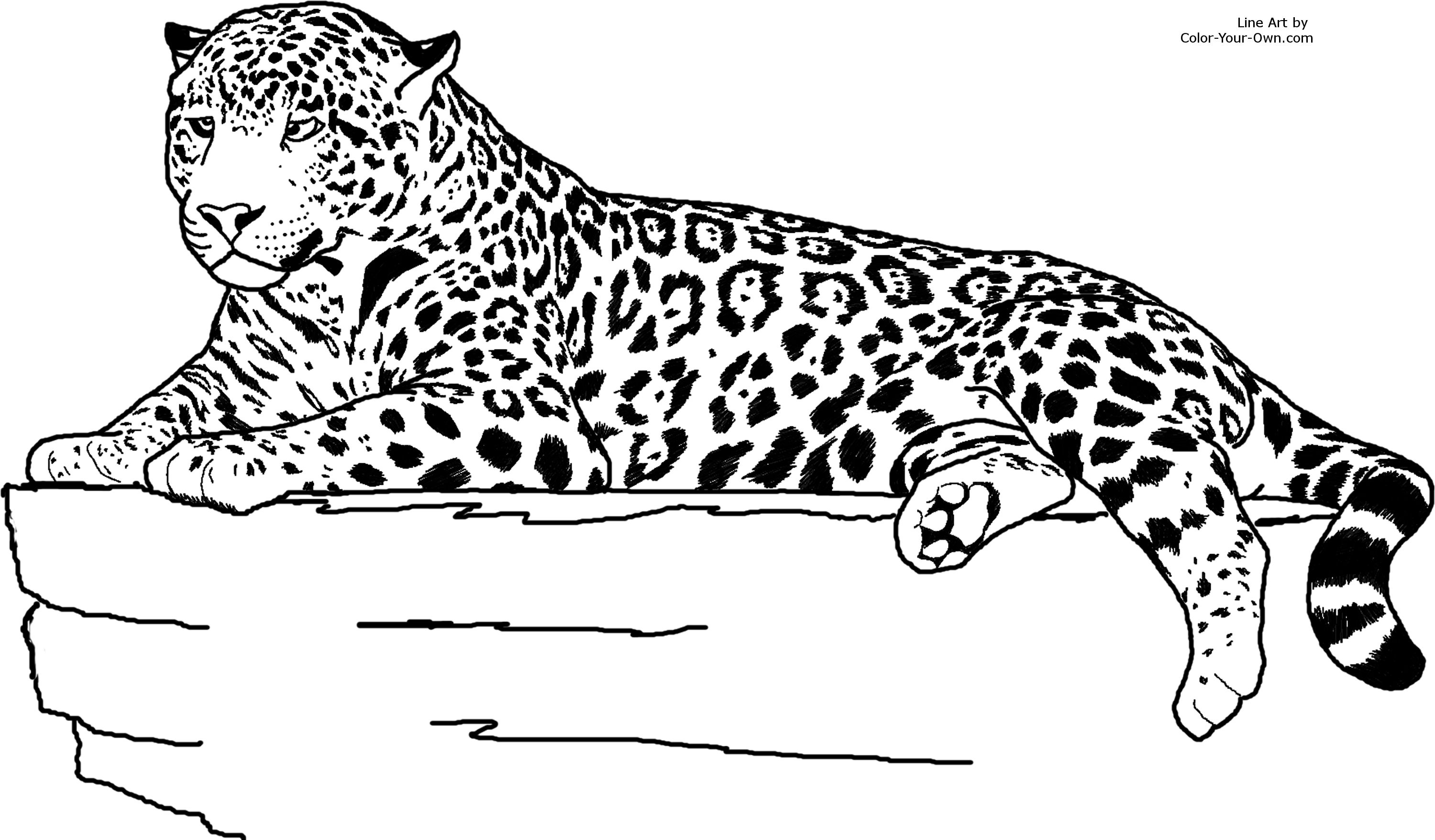 free coloring pages of realistic animals animal coloring pages for adults at getcoloringscom pages free realistic coloring animals of