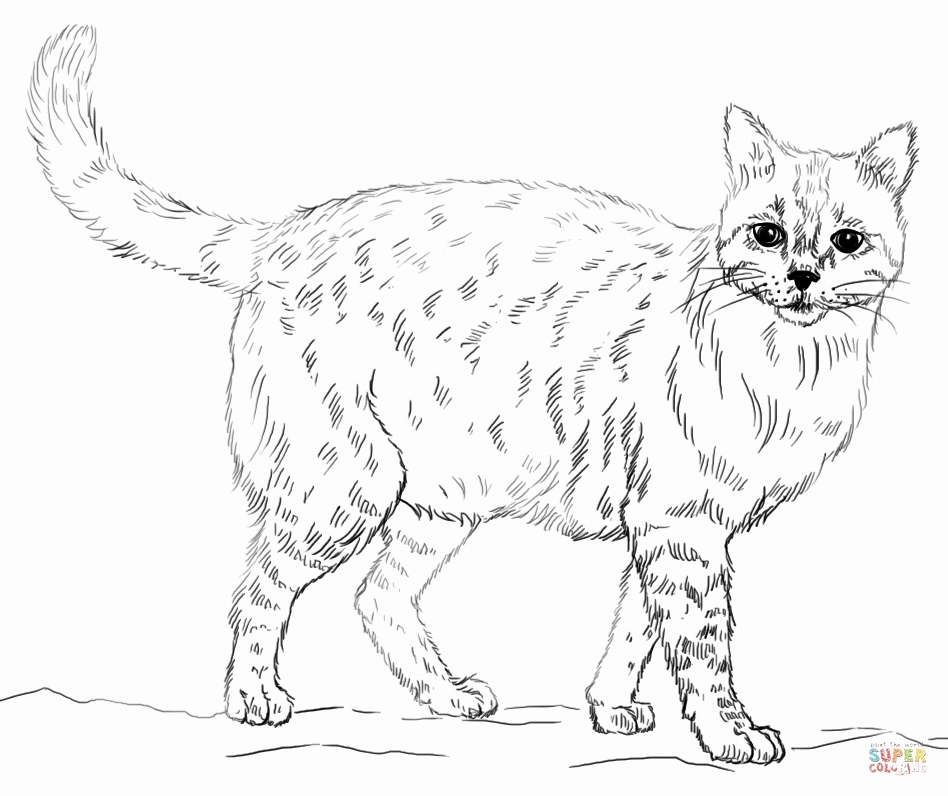 free coloring pages of realistic animals animal coloring pages momjunction free coloring animals realistic of pages
