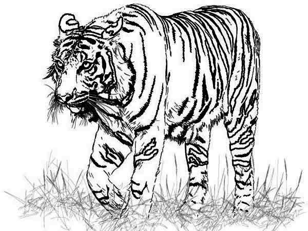 free coloring pages of realistic animals free coloring pages of realistic animals animals pages free of realistic coloring