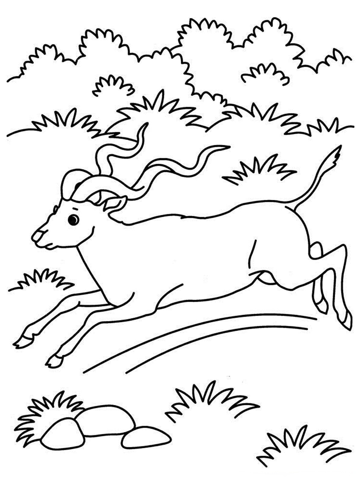 free coloring pages of realistic animals free realistic owl online coloring page for adults of coloring free animals realistic pages