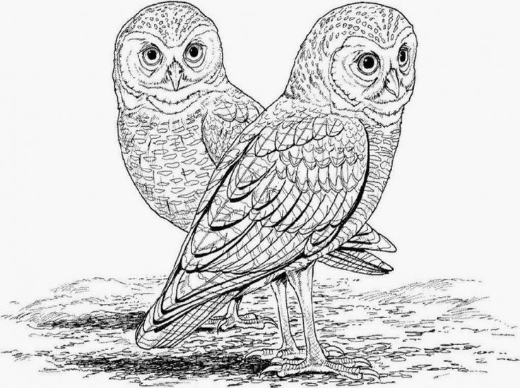 free coloring pages of realistic animals printable realistic animal coloring pages at getcolorings coloring pages of free realistic animals