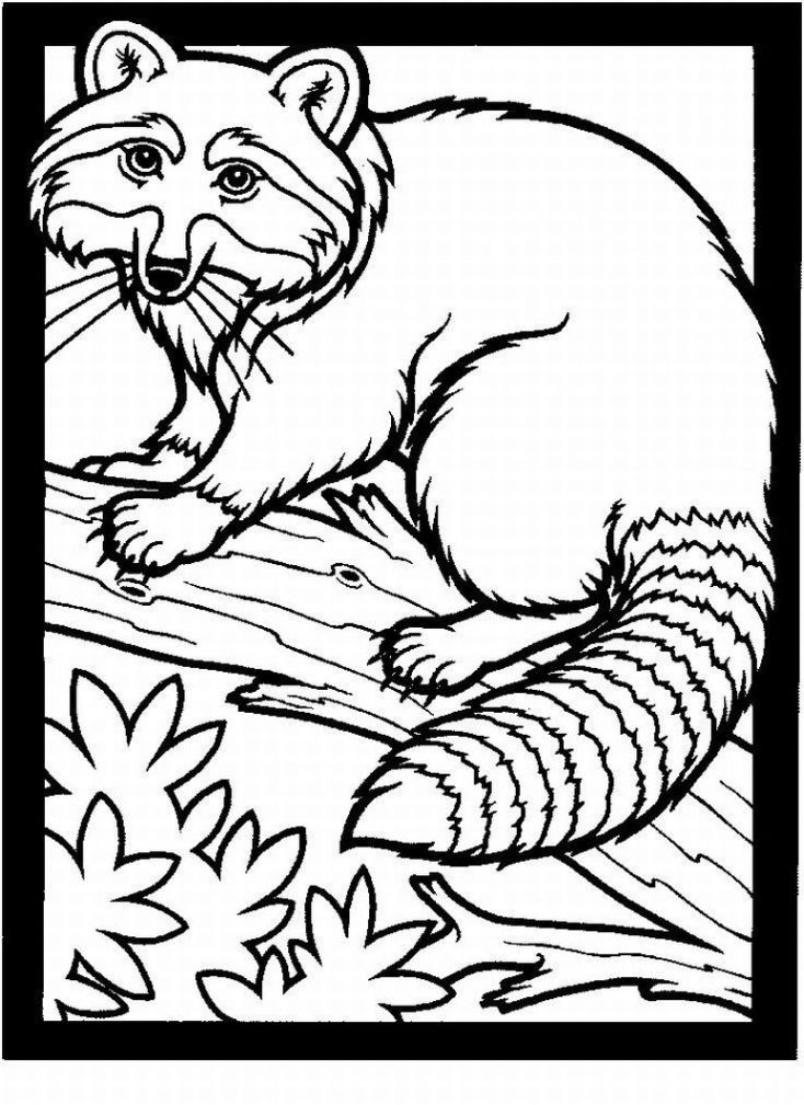 free coloring pages of realistic animals printable realistic animal coloring pages at getcolorings pages realistic coloring animals free of
