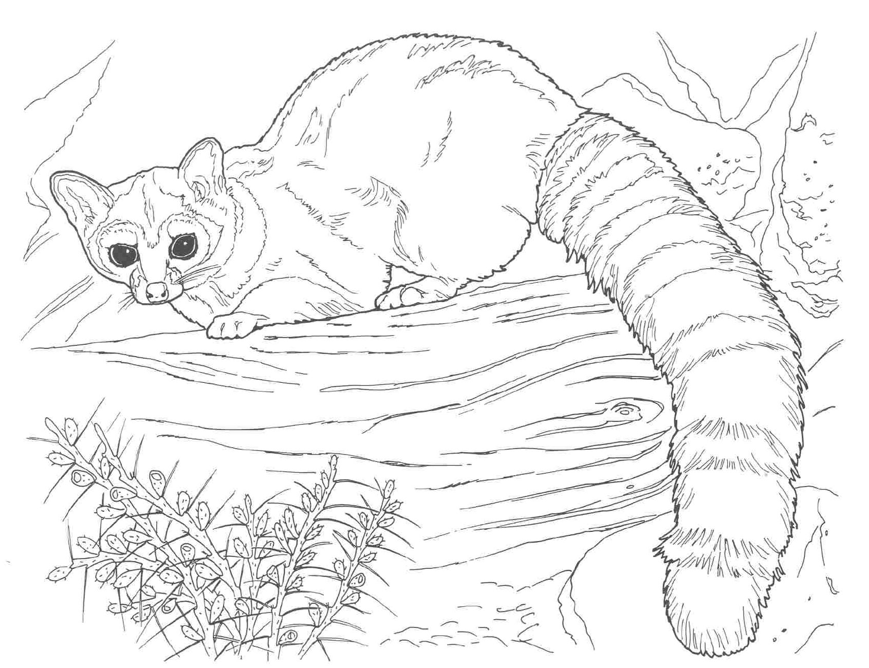 free coloring pages of realistic animals realistic animal coloring pages to print at getcolorings coloring of free pages realistic animals