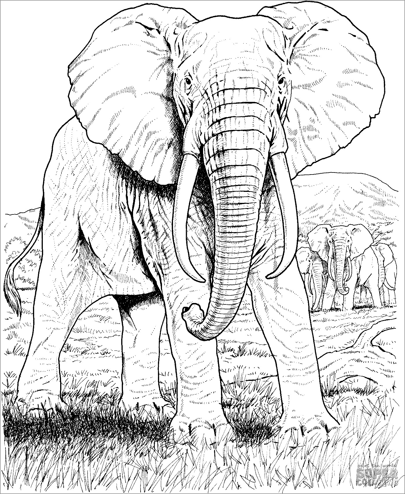 free coloring pages of realistic animals realistic coloring pages for adults at getcoloringscom animals realistic pages of coloring free