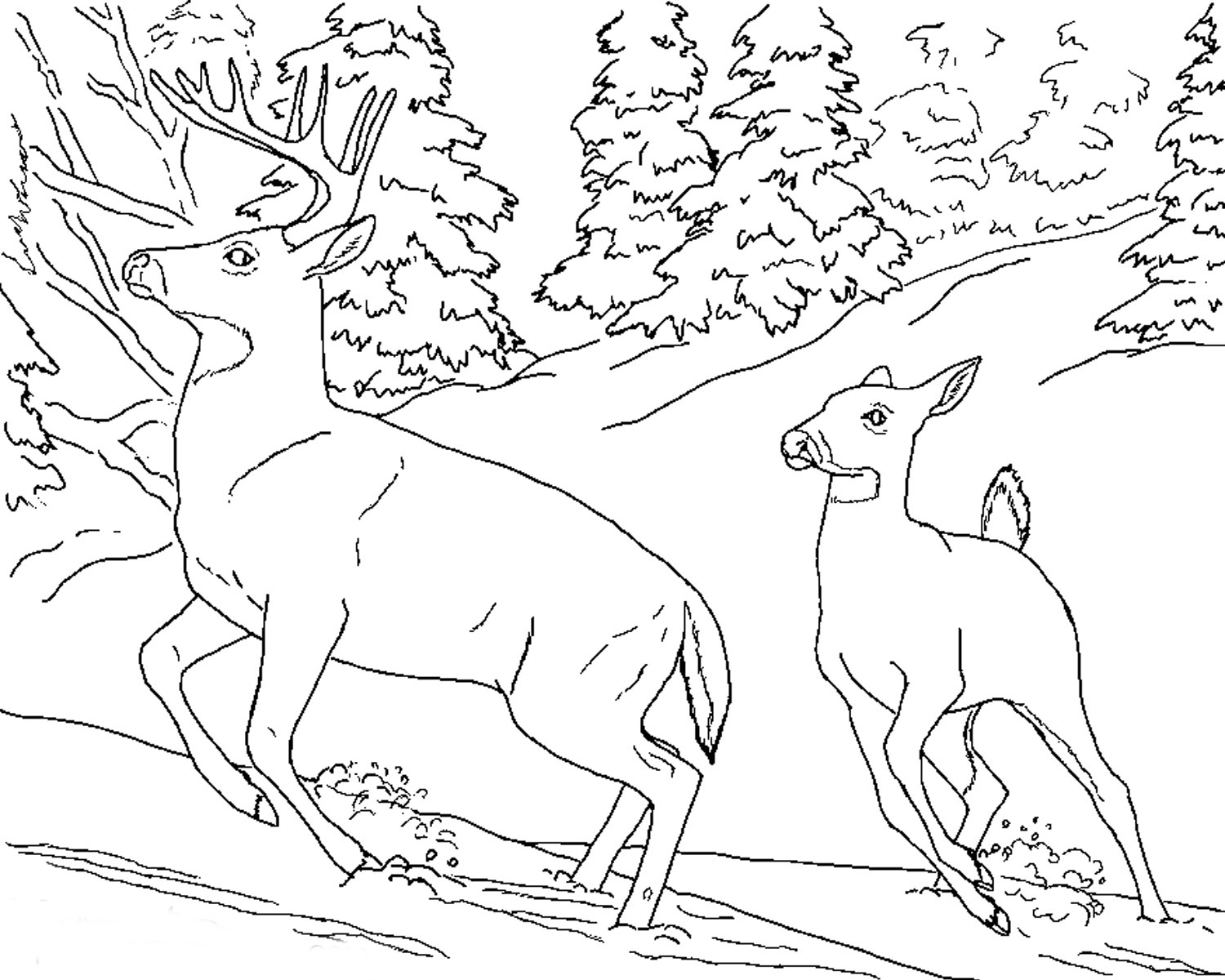 free coloring pages of realistic animals realistic drawing of animals at getdrawings free download of pages free coloring realistic animals