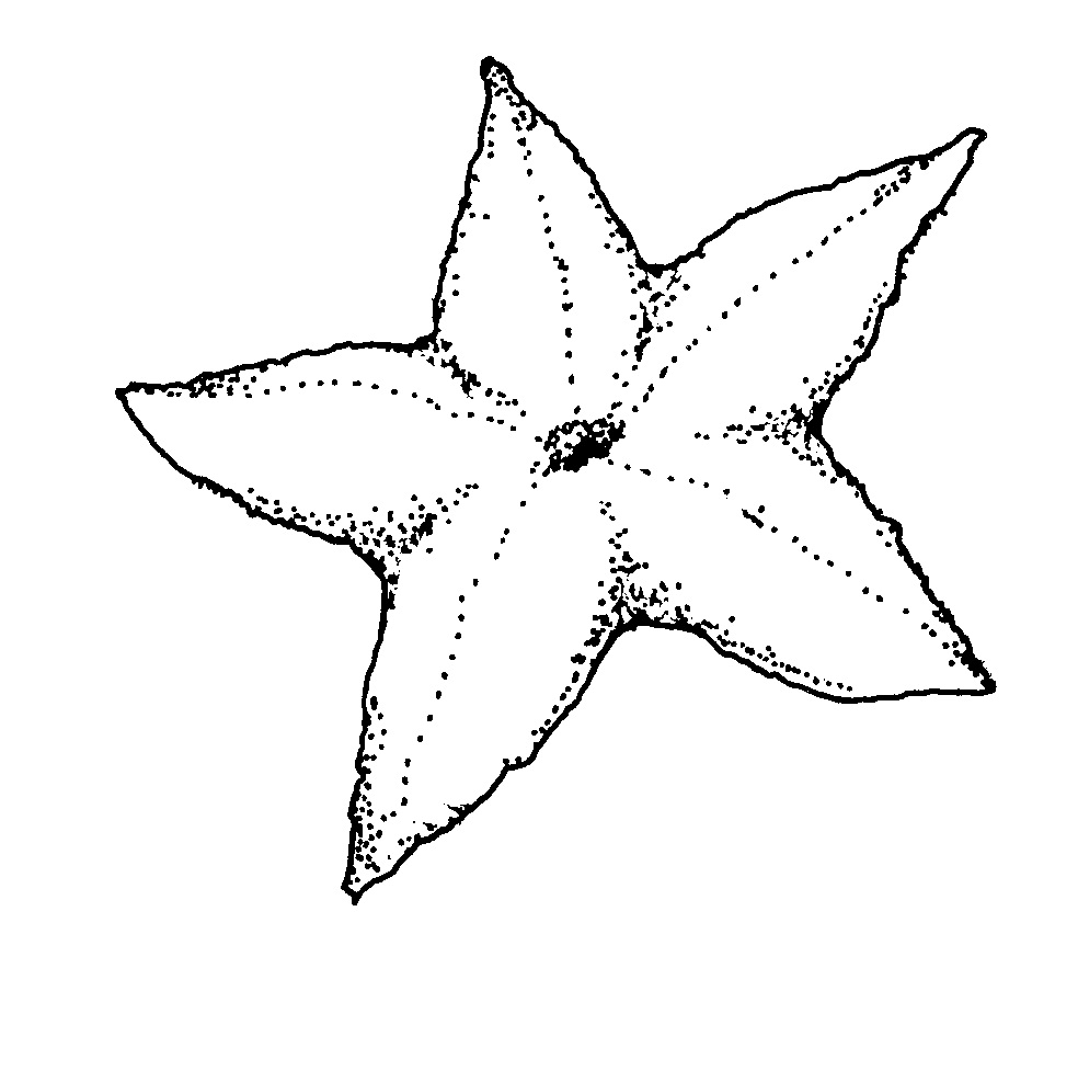 free starfish coloring page free printable starfish coloring pages for kids page coloring starfish free