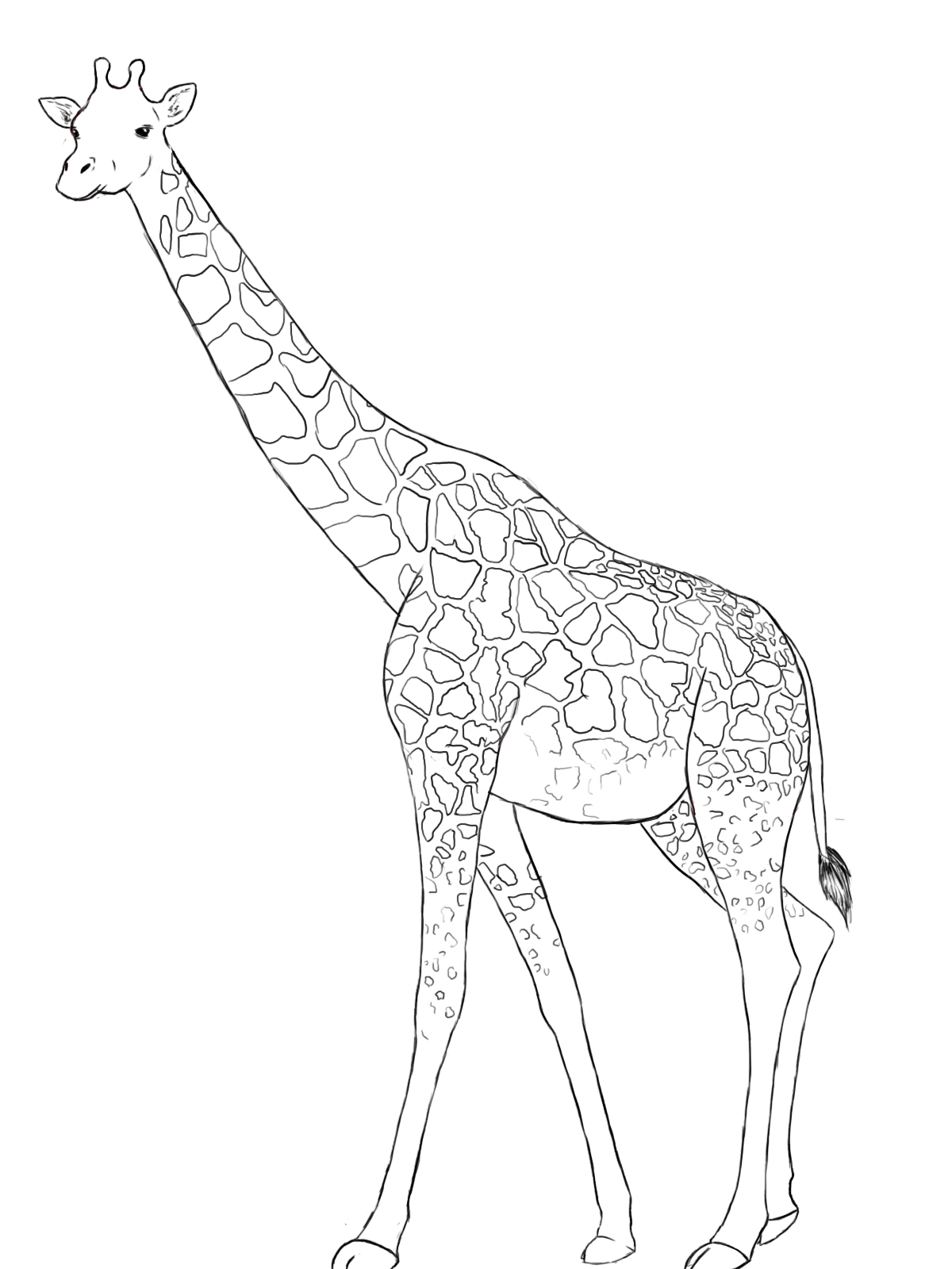 giraffe drawing how to draw a giraffe draw central drawing giraffe