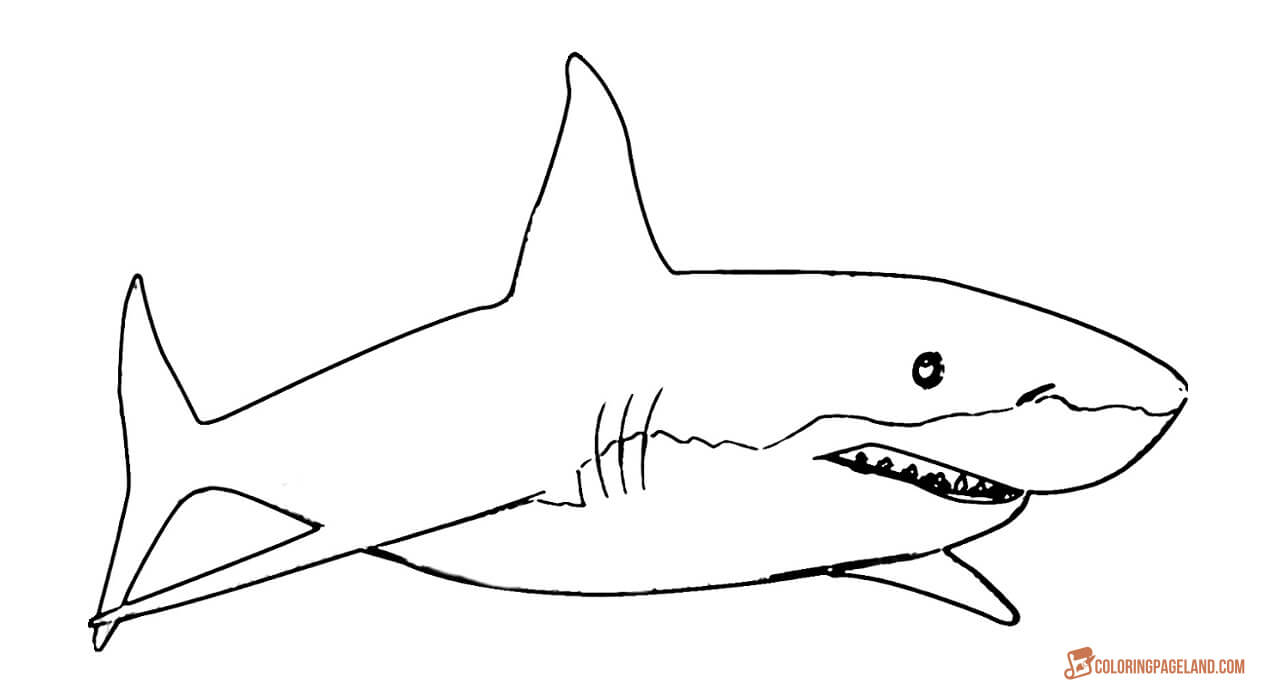great white shark coloring great white shark coloring pages to download and print for shark white coloring great