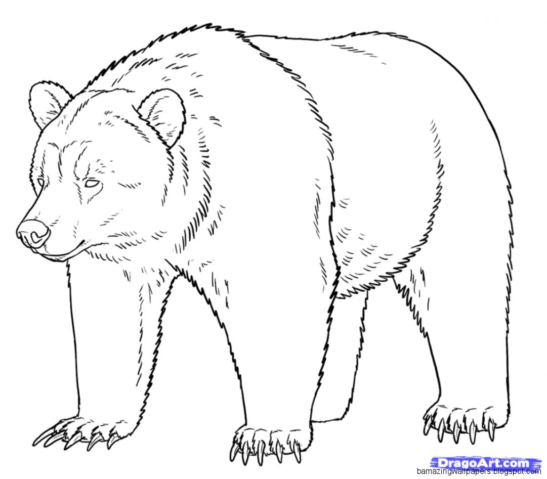 grizzly bear outline grizzly bear mother and cubs coloring page free bear grizzly outline