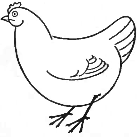 how to draw a chicken picture of hen in drawing clipart best chicken draw how a to
