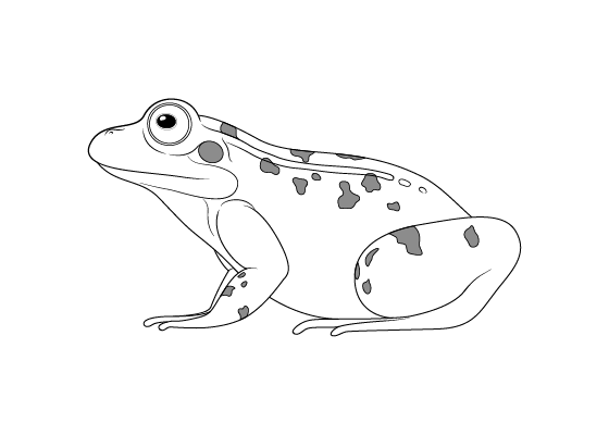 how to draw a frog easy frog drawing images at paintingvalleycom explore easy frog how draw to a
