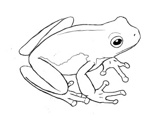how to draw a frog easy how to draw a frog draw central to frog how draw a easy