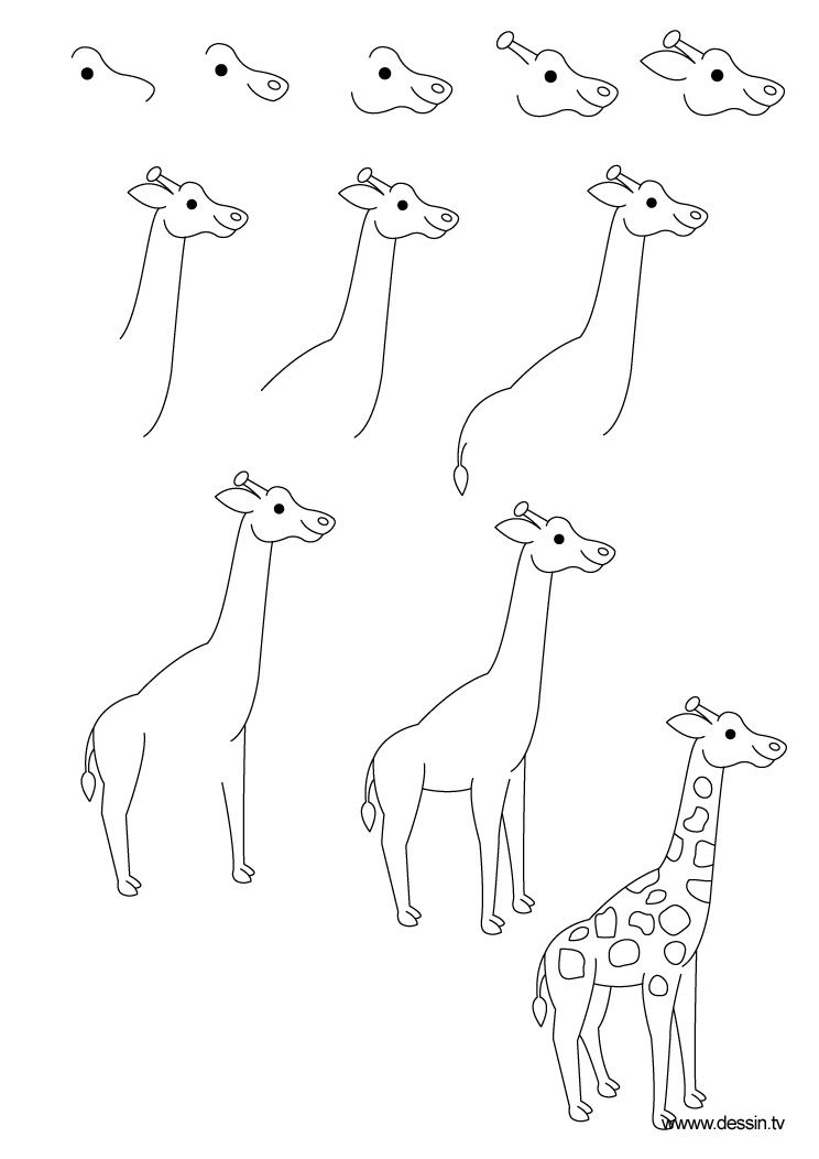 how to draw a giraffe step by step easy giraffe pictures drawing at getdrawings free download step by easy to step draw giraffe a how