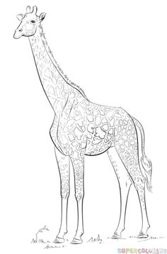 how to draw a giraffe step by step easy google image result for httpwwwdrawingstepcomimage by step step easy giraffe to a draw how