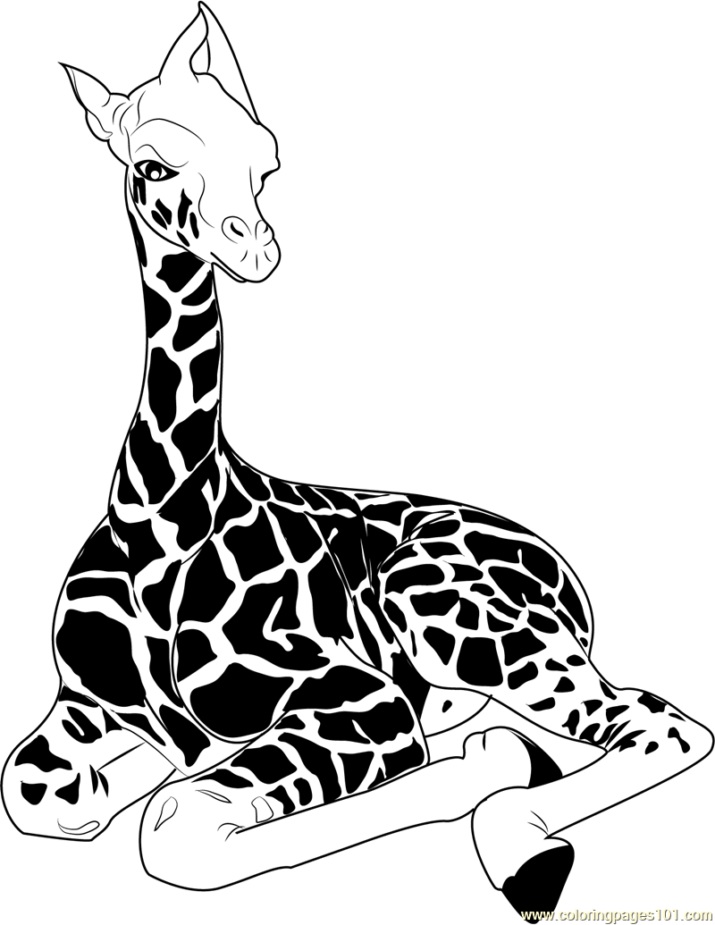 how to draw a giraffe step by step easy how to draw a cartoon giraffe in 5 steps cartoon giraffe a step easy step to draw by how giraffe