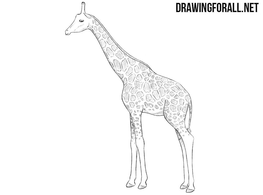 how to draw a giraffe step by step easy how to draw a simple giraffe step by step safari animals how easy draw step giraffe a by step to