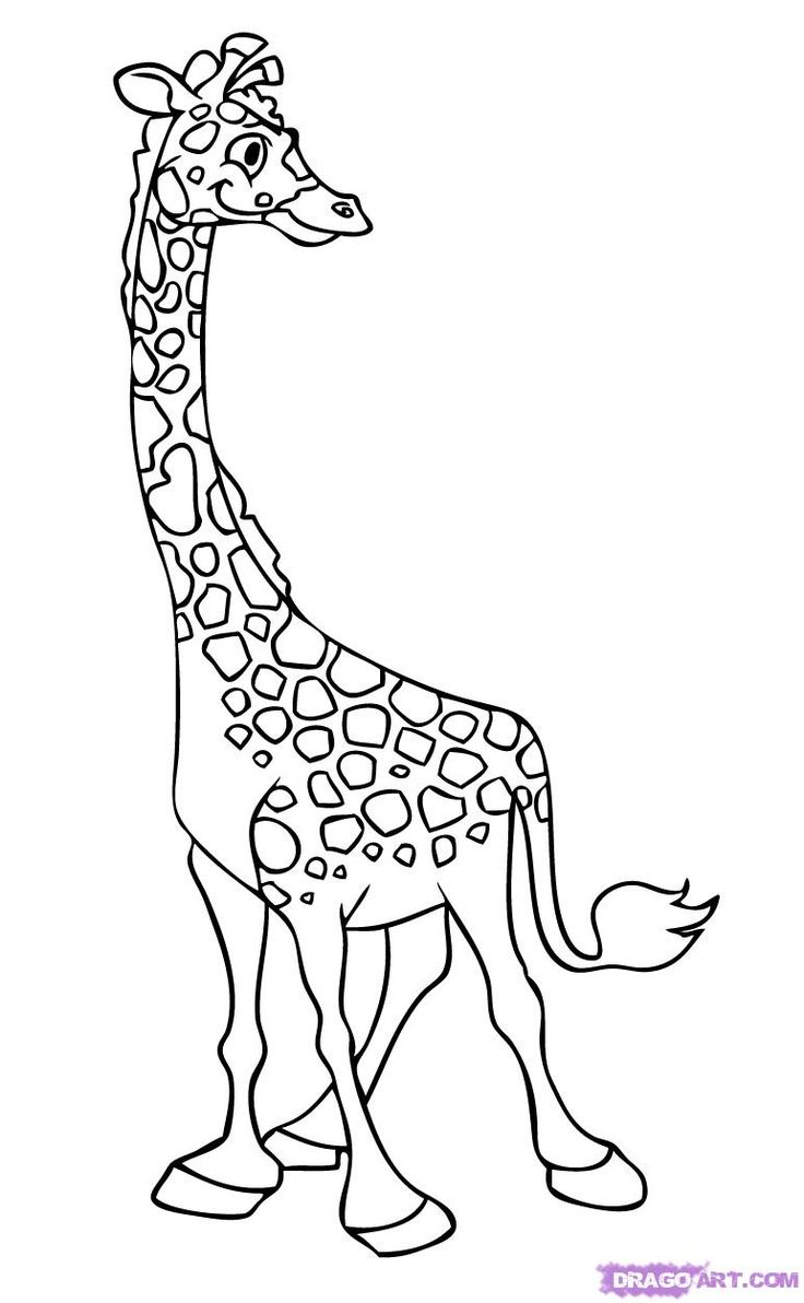 how to draw a giraffe step by step easy how to draw how to draw a giraffe for kids hellokidscom by to a easy giraffe step step draw how