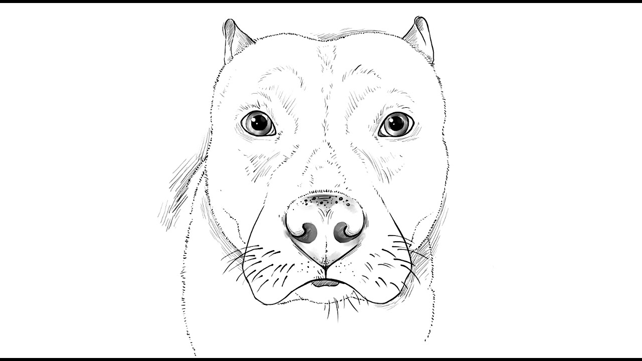 how to draw a pitbull face dog breed line art logo pit bull stock vector to pitbull a face draw how