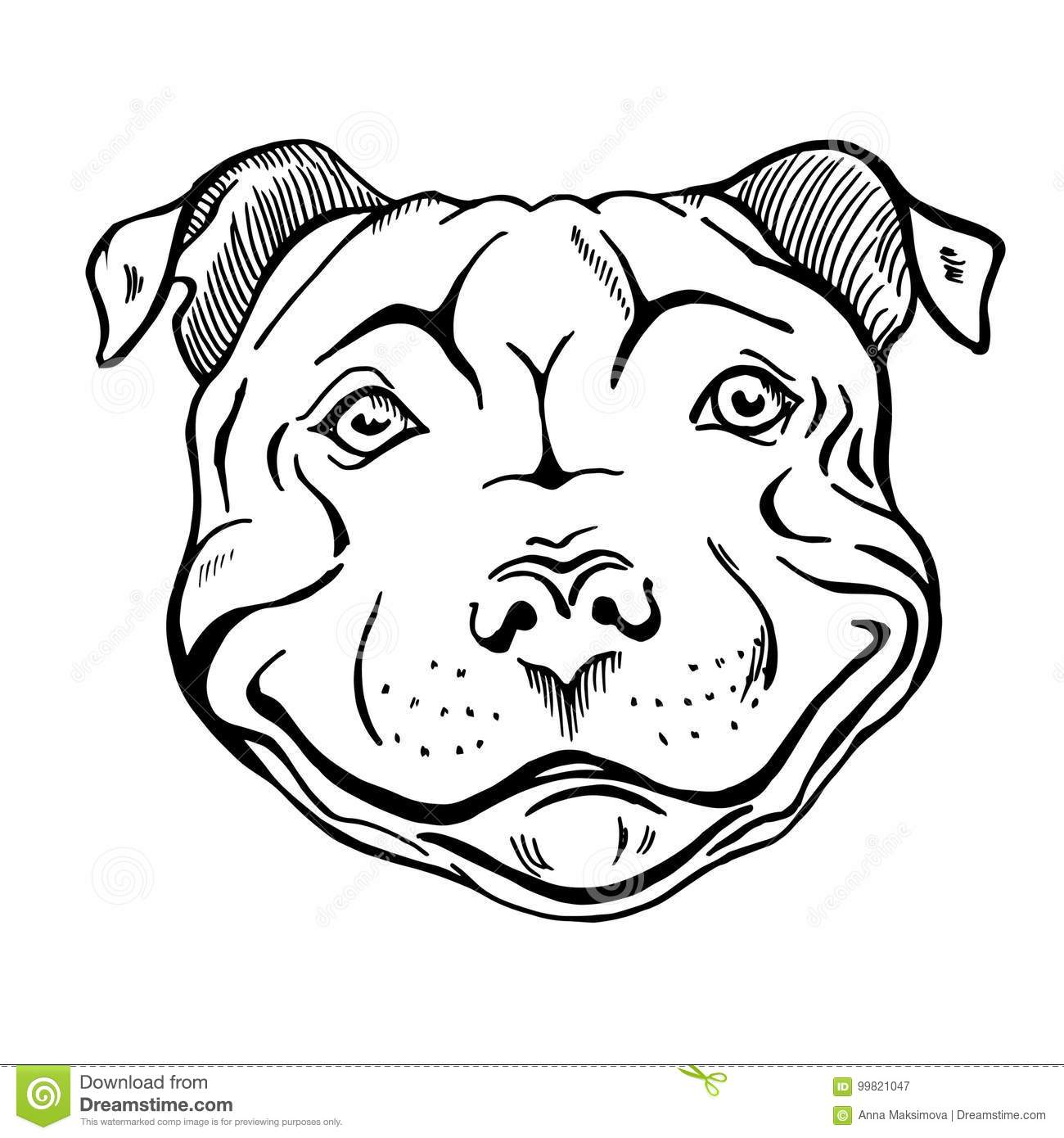 how to draw a pitbull face free to use pit bull lineart please read the rules to face pitbull how draw a