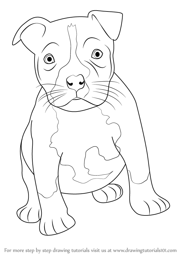 how to draw a pitbull face how to draw a pit bull Как нарисовать питбуля youtube draw how pitbull face a to