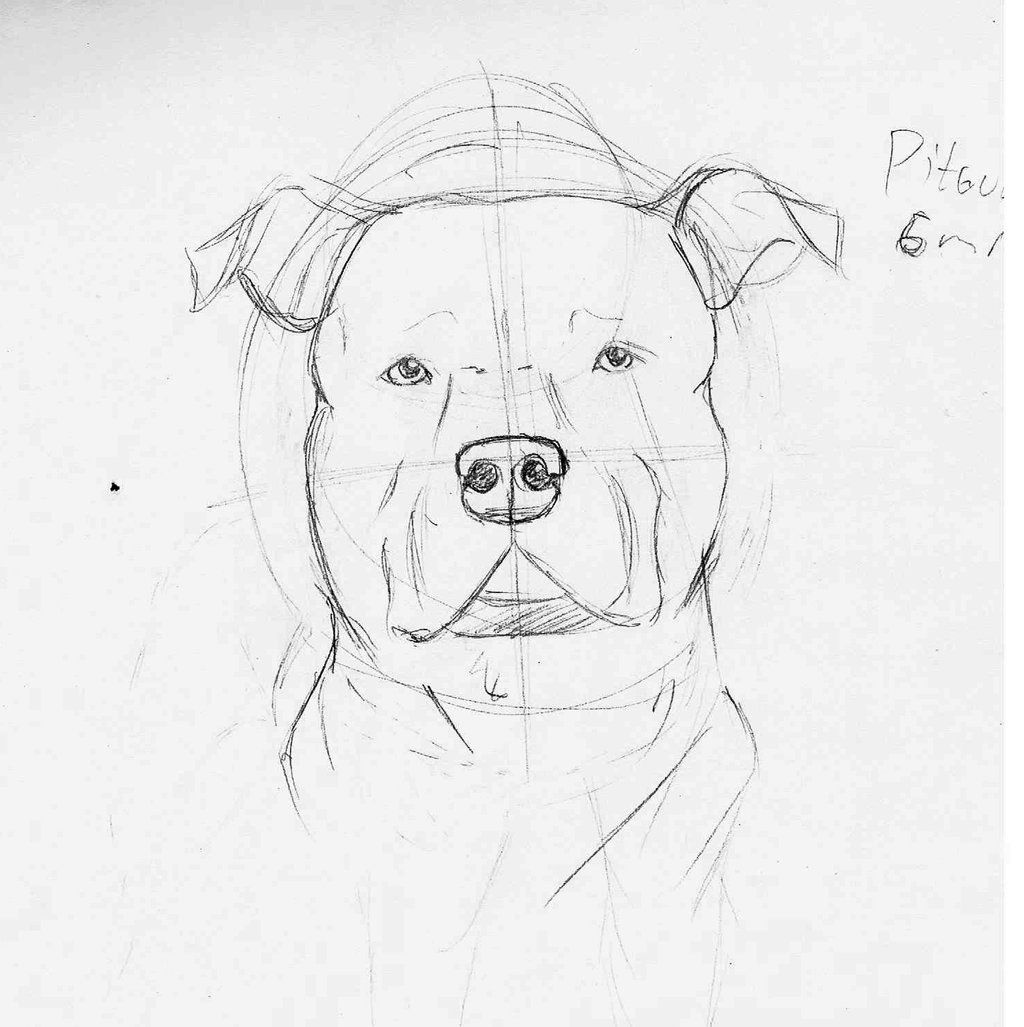 how to draw a pitbull face how to draw a pitbull dog youtube to face pitbull how draw a