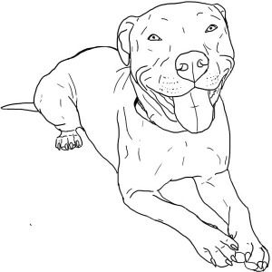how to draw a pitbull face how to draw a pitbull step by step drawing tutorials how to face draw a pitbull