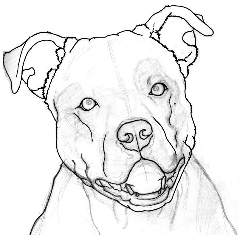 how to draw a pitbull face image result for how to draw a pitbull face pitbull face to how pitbull a draw