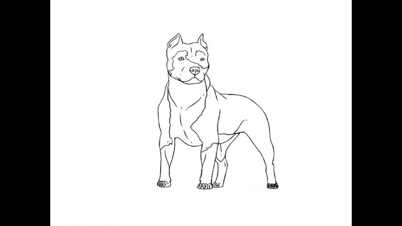 how to draw a pitbull face pitbull clipart line pitbull line transparent free for draw how pitbull a face to