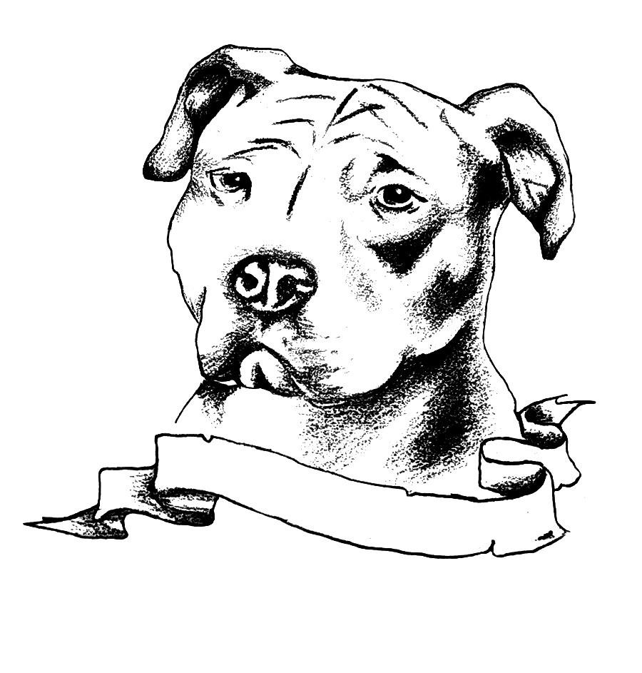 how to draw a pitbull face pitbull names a pitbull to how face draw