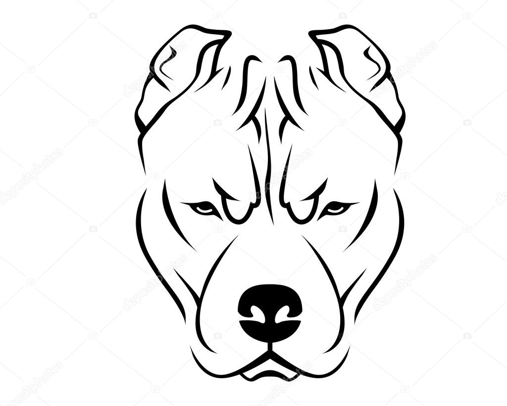 how to draw a pitbull face pitbull puppy drawing at getdrawings free download draw to how face a pitbull