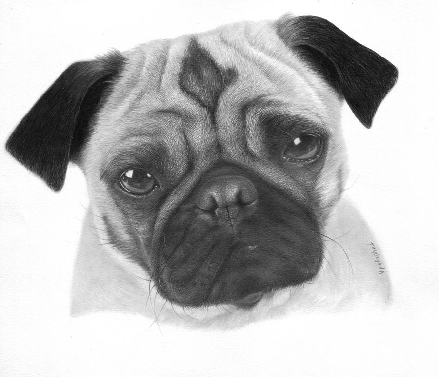 how to draw a realistic pug 17 best images about dogs on pinterest realistic pencil to realistic how pug a draw