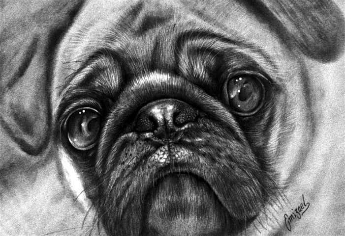 how to draw a realistic pug 19 animal drawings free premium templates to realistic draw a how pug