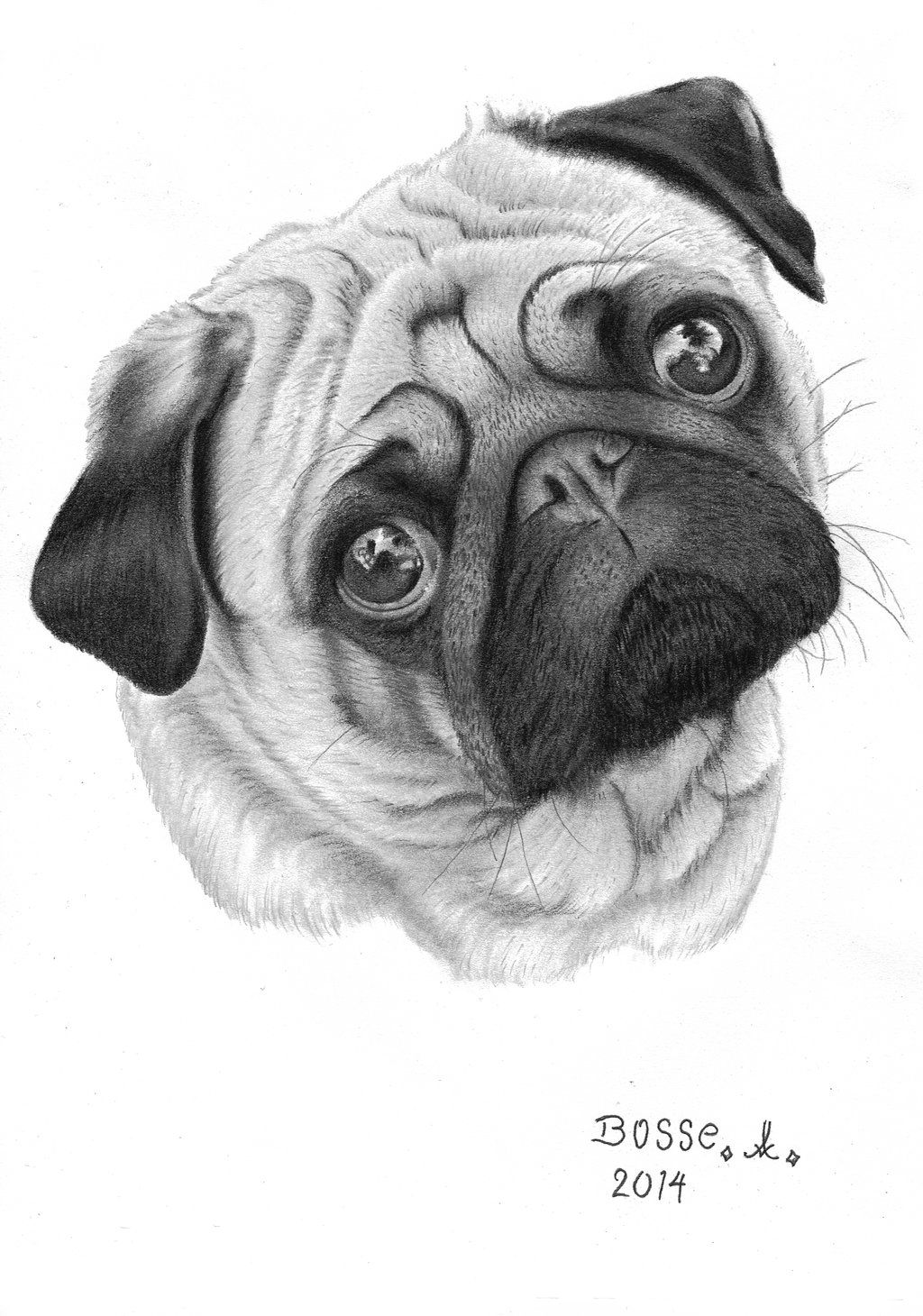 how to draw a realistic pug beautiful macro photography by jürgen gerstmayr dog draw to realistic a pug how