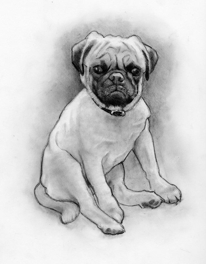 how to draw a realistic pug dog original drawing little pug wall art realistic animal to realistic how a pug draw